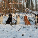 Schnee-03.02.2012-440