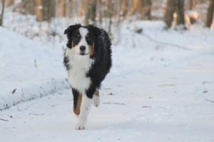 Schnee-03.02.2012-478