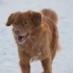 Schnee-03.02.2012-500